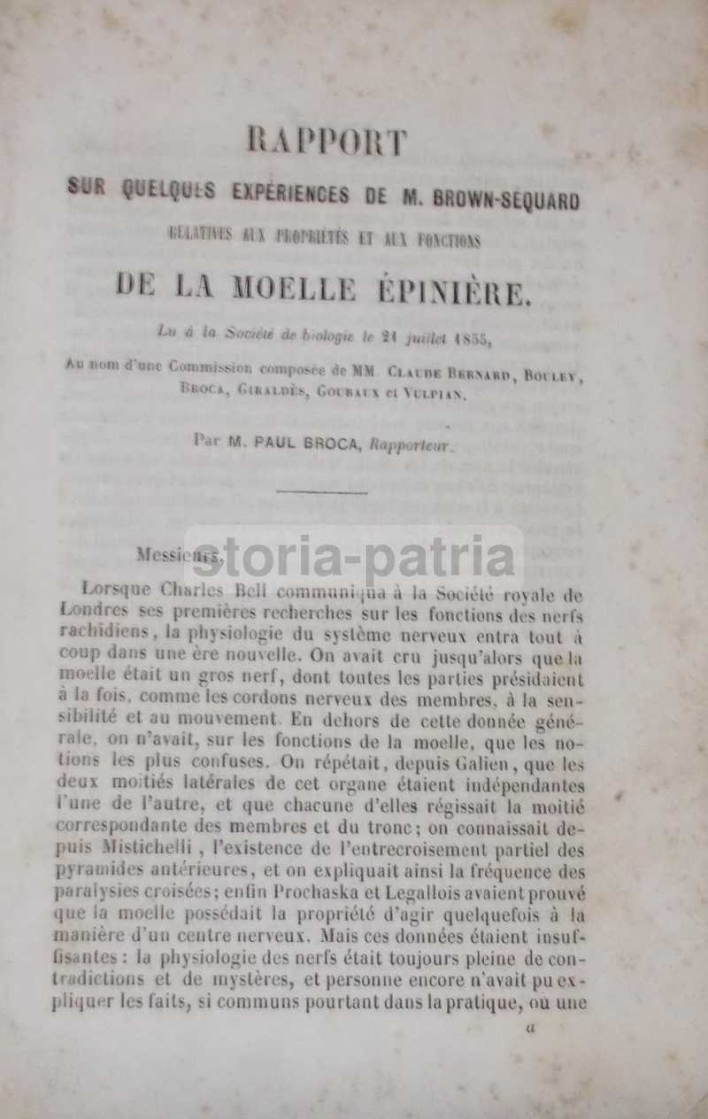 Medicina, Neurologia, Midollo Spinale, Esperienze Di Brown Sequard, Cavie, Broca, 800 immagine 0